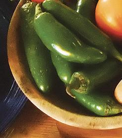 Pepper, Early Jalapeno, Hot