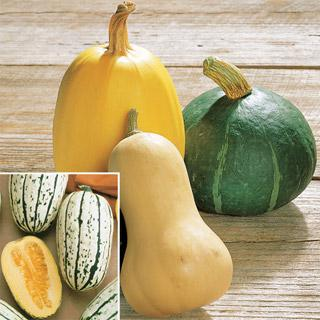 Organic Winter Squash Harvest Blend