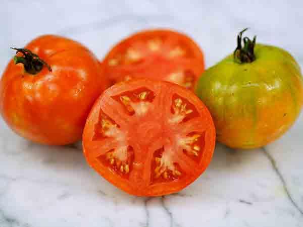 Bison Tomato
