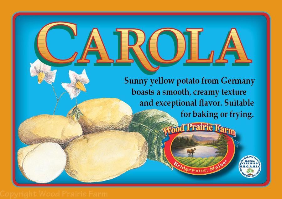Certified Carola Seed Potato
