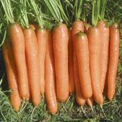 Yaya F-1 Carrot
