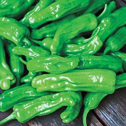 Italian Pepperoncini Sweet Pepper
