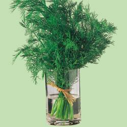 Herb Dill 'Bouquet'