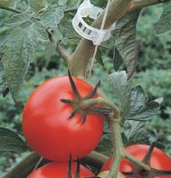 Tomato Trellis Clips - Case of 9,250