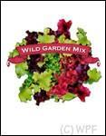 Organic Wild Garden Spring Mix Lettuce