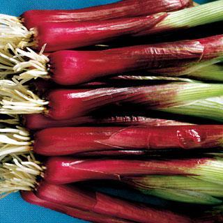 Onion Red Baron Hybrid
