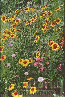 Flower Mix-Northwest Wildflower
