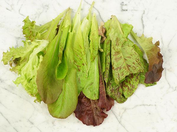 Red Wing Lettuce Mix