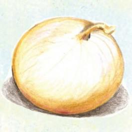 Jaune Paille Des Vertus Onion