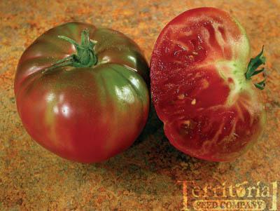 Cherokee Purple Tomato Organic