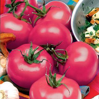 Tomato Park's Razzleberry Hybrid