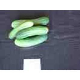Thai Special Cucumber