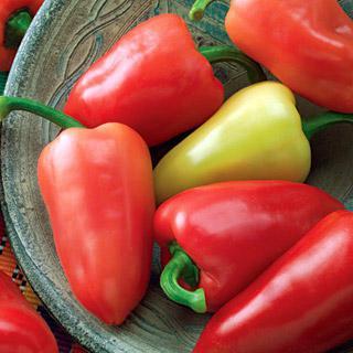 Pepper Mariachi Hybrid