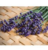 Munstead-Type Lavender