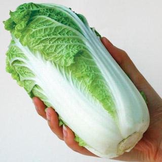 Baby Chinese Cabbage Wa Wa Tsai Hybrid