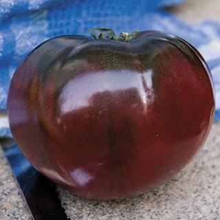 Cherokee Purple Tomato Grafted Plant