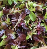 Wildfire Lettuce Mix