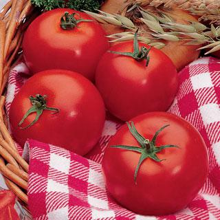 Tomato Park's Early Challenge Hybrid