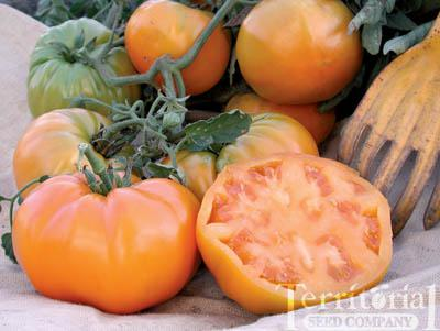 Orange King Tomato Organic
