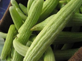 Cucumber, Armenian Light Green