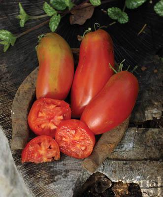 San Marzano Gigante 3 Tomato