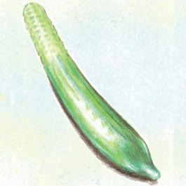 Long Anglais Cucumber
