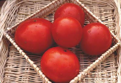 Oregon Spring Tomato Conventional & Organic