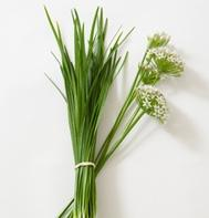 Chinese Leeks/Garlic Chives (OG)