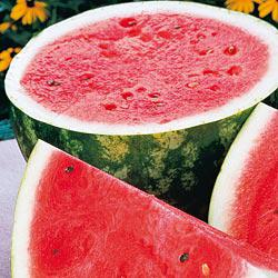 Rattlesnake Watermelon