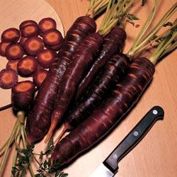 Carrot Purple Haze F1 Hyb.