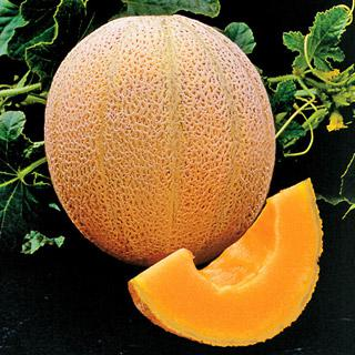 Melon Hale's Best Organic