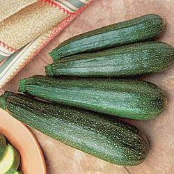 Gurney's Pride II Hybrid Zucchini Summer Squash