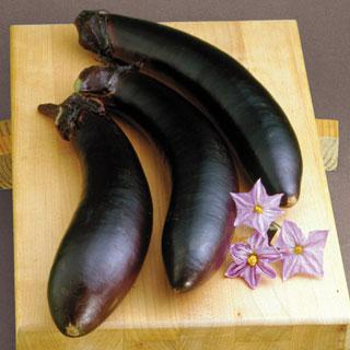Eggplant Swallow Hybrid