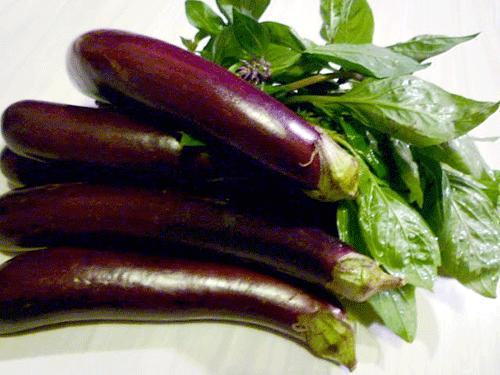 Eggplant, Long Purple