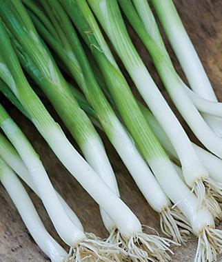 Onion, Parade (Bunching Type)