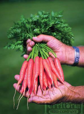 Adelaide Carrots