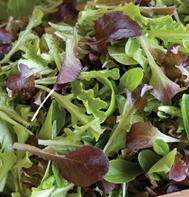 Encore Lettuce Mix (OG)