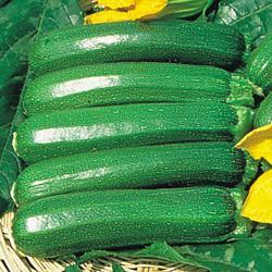 Summer Squash/Zucchini Defender F1 Hybrid