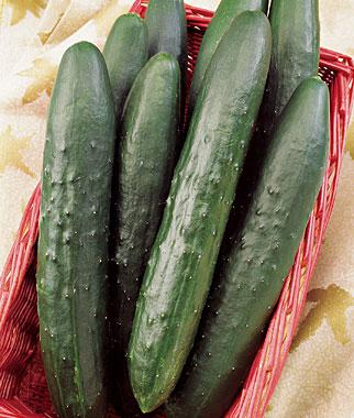 Cucumber, Sweeter Yet Hybrid