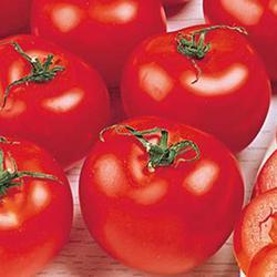 Delicious Heirloom Tomato
