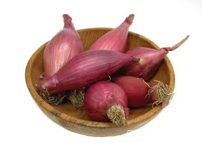 Onion Plants-Red Torpedo