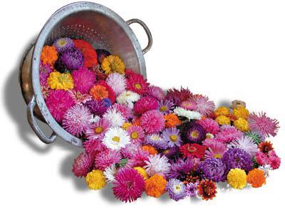 Aster, China-Cut Flower Assortment