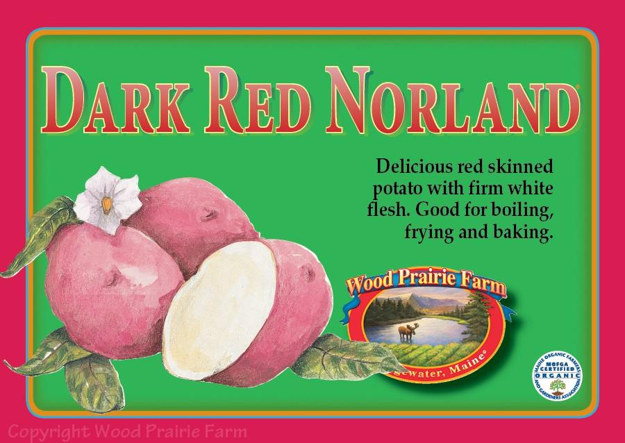 Dark Red Norland Seed