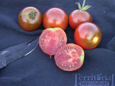 Black Prince Tomato Organic