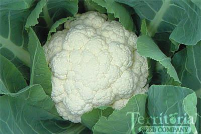 Cloud Cauliflower