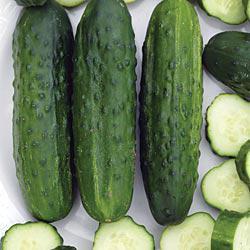 Sassy Hybrid Cucumbers