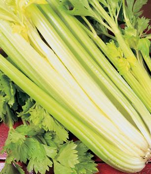 Celery, Golden Self-Blanching