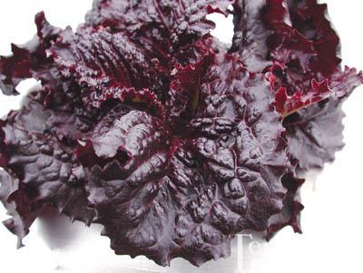 Merlot Lettuce Organic