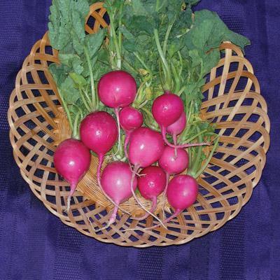 Pink Celebration Radish