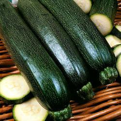 Summer Squash/Zucchini Midnight F1 Hybrid